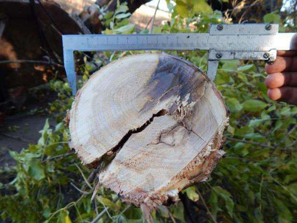 Обрізувач дерев і лісосмуг