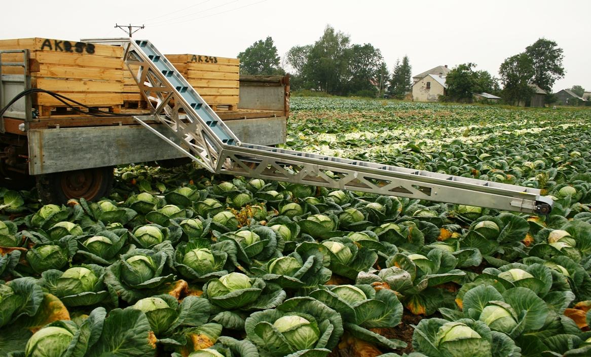 транспортер овощей