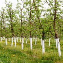 Фарба для дерев від зайців і гризунів